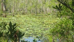 Westgate Nature Park